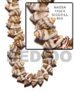 Fashion Nassa Tiger Shell Beads